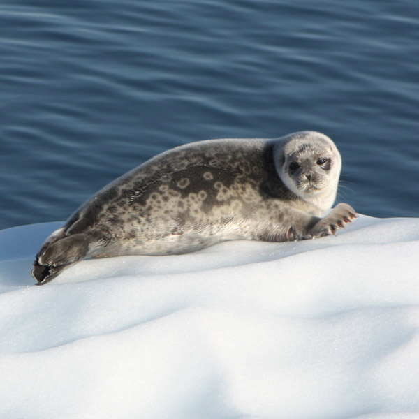 Animaux du pôle nord